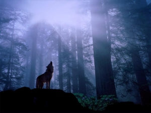 law of attraction wolf howl to attract