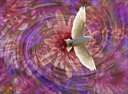 peaceful dove for momentum