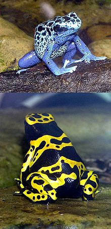 poison dart frog and law of attraction