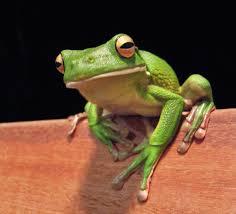 frog 2 4lawofattraction